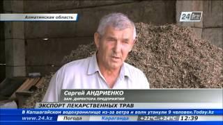 Крестьяне Алматинской области экспортируют лекарственные травы