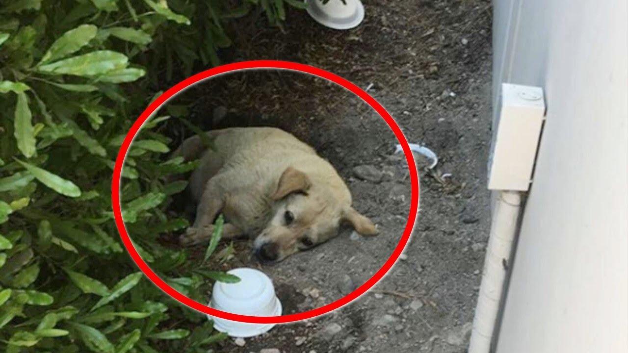 飼い主が引っ越して置き去りにされた犬。心配した女性が犬を助けたい一心でSNSに写真をアップし続けると…【感動 動物】