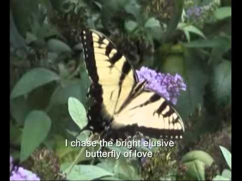 Elusive Butterfly of Love-Tony Vincent