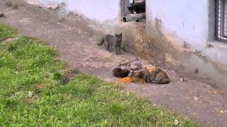 The stray cats HD 1920 - Бездомные кошки