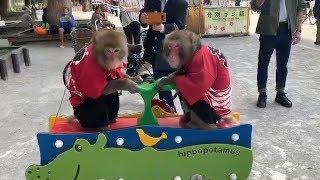 お猿たちのアトラクションMonkey's Rides