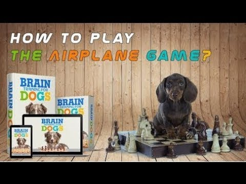 the-airplane-game---brain-training-for-dogs-|-the-airplane-game-exam-demonstration