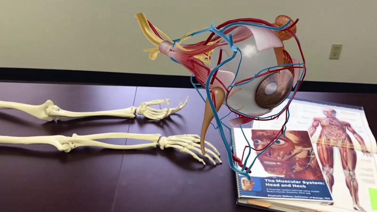 PROMO] Atlas de anatomía humana edición 2018 | Visible Body - YouTube