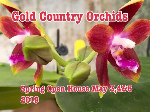 Gold Country Orchids Spring Open House May 3-5, 2019