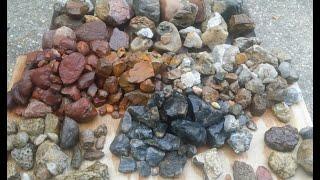 Rockhounding glacial till, fossils, jasper, agate, chert, pyrite #8