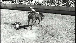 Cowboys ride bucking horses and bulls at a rodeo event in Joseph, Oregon. HD Stock Footage