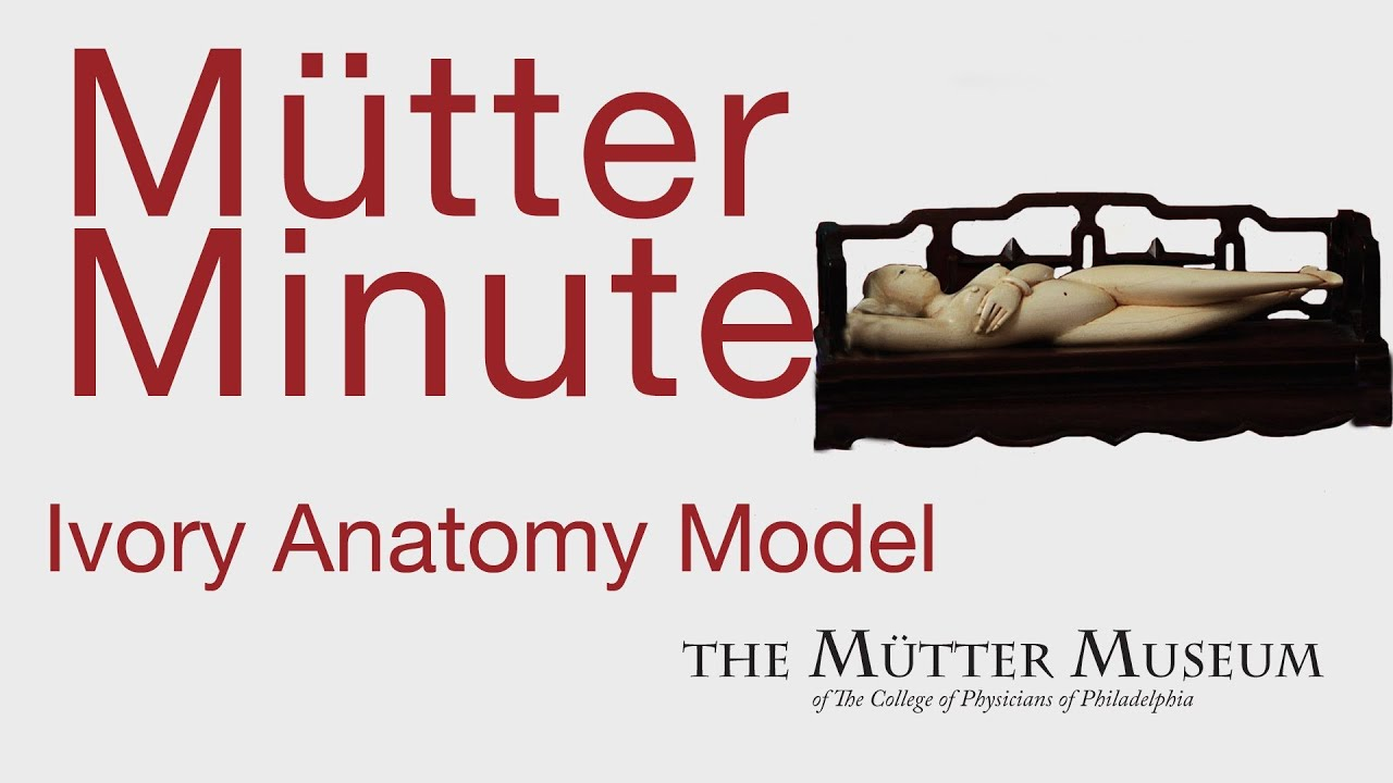 Mutter Minute Ivory Anatomy Model - YouTube