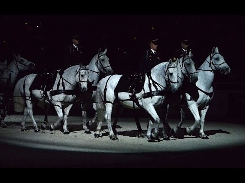 The US Army Caisson Platoon, the Last Mounted Unit in the Dept of Defense