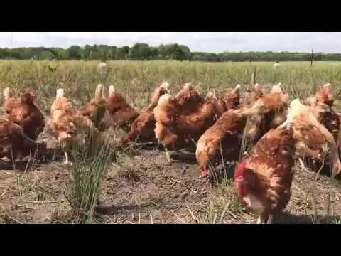Girls on Grass: Grazing Green Texas Pastures