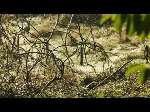 Chevreuil à l'approche Chalencon Ardèche