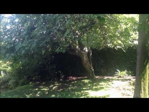 ASMR - My Garden in Chile