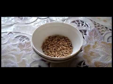 пшеница для рыбалки купить москва