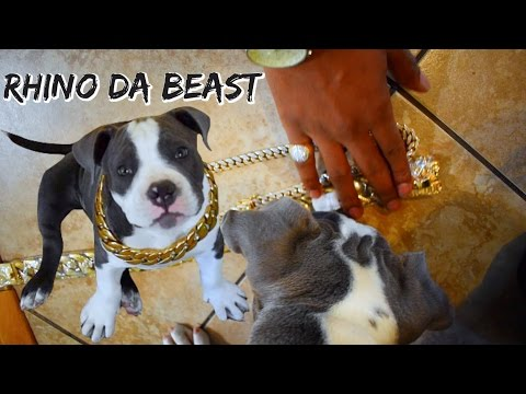 I Bought Rhino An Expensive Gold Cuban Link Chain.