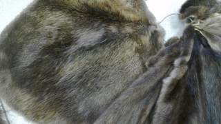 Шкуры бобра выделанные(Сайт: www.arktur-22.ru Компания ARKTUR-22 предлагает Вам купить Шкуры бобра выделанные Оптом и в розницу. Оплата:..., 2012-08-24T12:43:32.000Z)