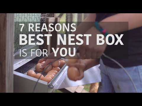 The BEST way to collect clean eggs! - Best Nest Box