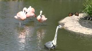 Heron meets flamingo