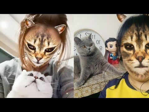 Dog & Cat Reaction To Mask Filter – Funny Dogs & Cats Scared Of Cat Mask Filter