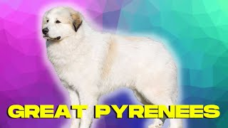 Great Pyrenees Dog TOP 10 Facts Pros and Cons