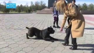 Профессия хендлер: как зарабатывать на любви к собакам? / УтроLive / НТС