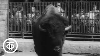 Доброе утро, Дар! О московском зоопарке и его обитателях (1973)