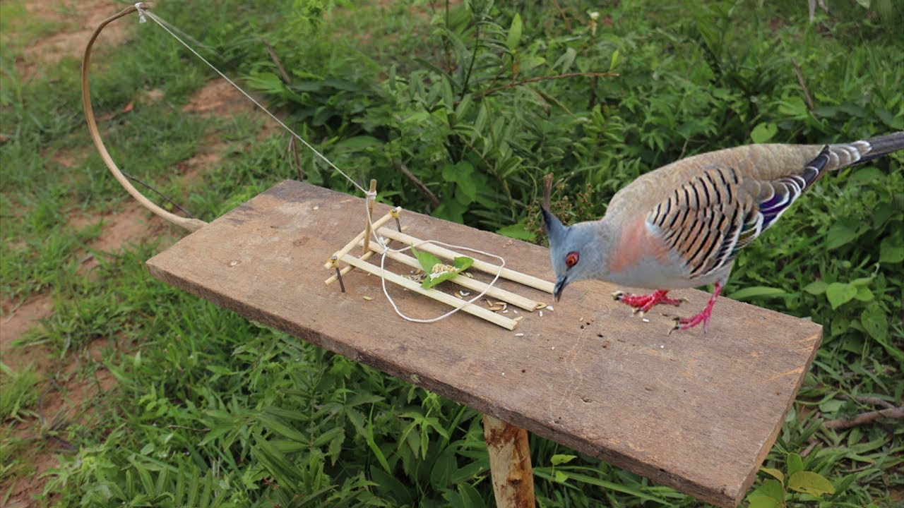 how to build a simple bird trap