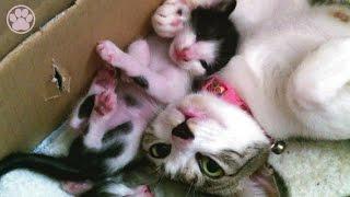 母猫、甘噛み教育「生後20日目」子猫がかわいい仔猫を産みました! 【...