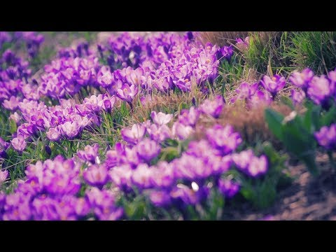 """Peaceful Music, Relaxing Music, Instrumental Music """"Meadow's Rest"""" By Tim Janis"""