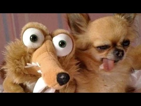 The greatest and funniest ANIMAL moments #13 - Funny animal compilation - Watch & laugh!
