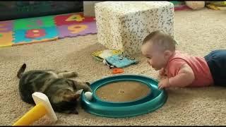 Смешные коты кошки и другие животные Funny Cats – НЕ РАЗРЕШАЕТСЯ ТОСКОВАТЬ НЕВЕРОЯТНО СМЕШНО