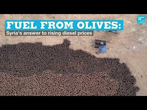 Fuel from olives: Syria's answer to rising diesel prices • FRANCE 24 English