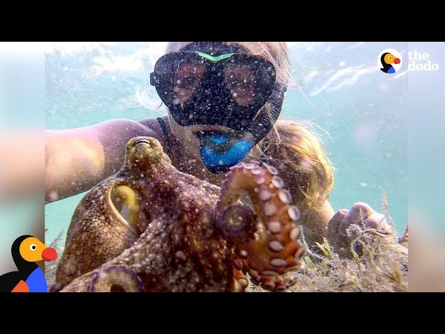 Woman And Octopus Are Best Friends – ELORA & EGBERT | The Dodo