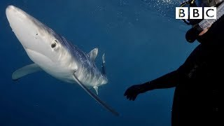 How I got a selfie with this SHARK! - BBC