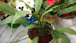 पौधे हरे भरे और स्वस्थ हैं फिर भी फूल क्यों नहीं आते,कारण और निवारण,anvesha,s creativity