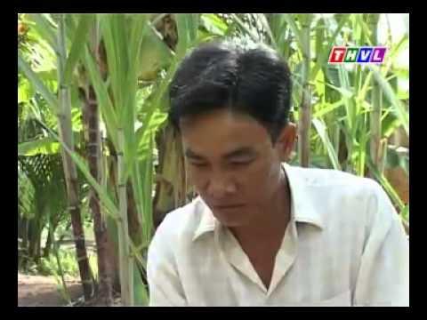Về Miệt Thứ - Chuyện Ở rừng An Minh -Nhipsonganminh.info