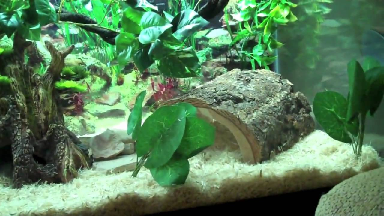 The Coolest Snake Tank Ever Guaranteed Youtube