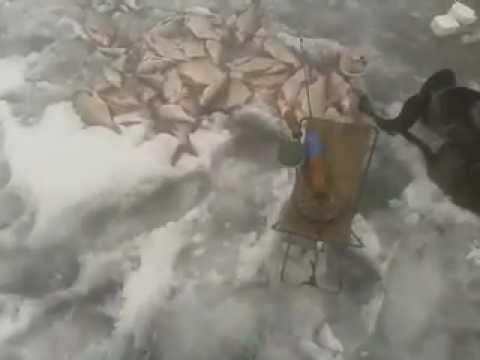 Зимняя рыбалка. Веселовское водохранилище
