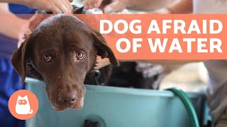 How to BATHE a DOG Who HATES WATER 🐶💧 (Tips)