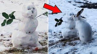 Кролик решил поцеловать снеговика и только потом раскрылся его настоящий план