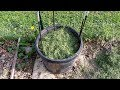 Planting Pole Beans in a Container Quick Tip The Wisconsin Vegetable Gardener