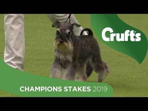 YKC Stakes Final and Presentation | Crufts 2019