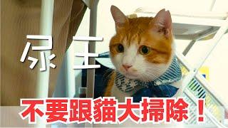 好味小姐-千萬不要跟貓咪大掃除-掃不完啊-好味貓日常-ep64