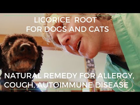 Licorice Root: Natural Treatment for Dog Allergy, Cough, Stomach Upset, Autoimmune Disease