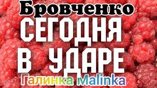 Семья Бровченко /Сегодня в Ударе /Обзор Влогов /