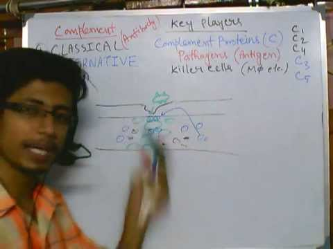 Complement system part 2 (Common features of complement)