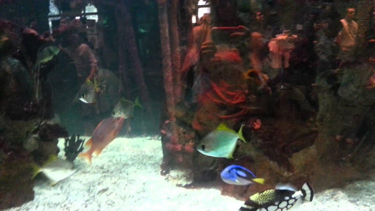 Fish aquarium in niagara falls - Fish Tank Rainforest Cafe In Niagara Falls