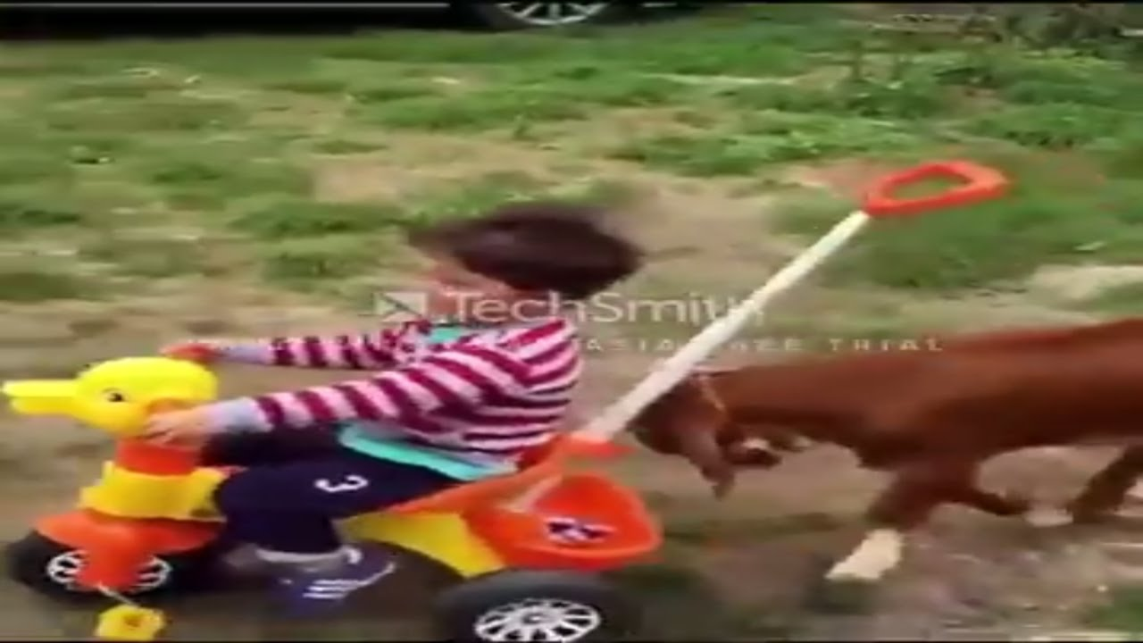 Funny animals video compilation Goats and kids video
