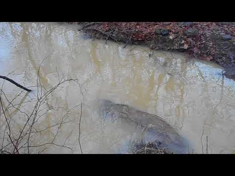 Sun Homes Development in Rye Brook Polluted Stormwater into Blind Brook