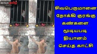 சிவபெருமானை நோக்கி குரங்கு கண்களை மூடியபடி தியானம் செய்த காட்சி |Ekambaranathar Temple|Britain Tamil