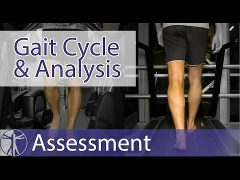 Gait Cycle & Gait Analysis
