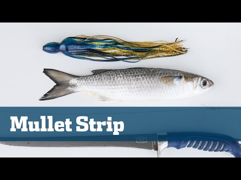 Mullet Strips Trolling Kingfish Wahoo Offshore - Florida Sport Fishing TV Rigging Station